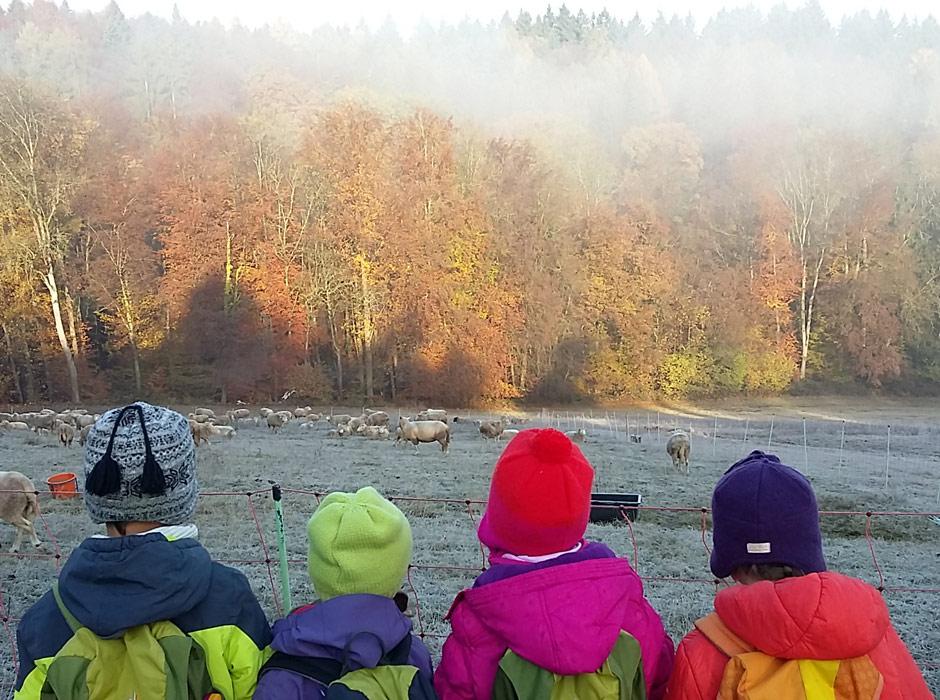 Kinder betrachten Schafe